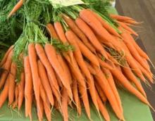 Carrot bunches at market